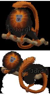 Kamarád - opice: Lvíček zlatohlavý