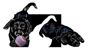 Kamarád - pes: Cyrilla