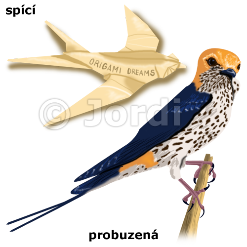 Kamarád - vlaštovka: vlaštovka menší - Hirundo abyssinica