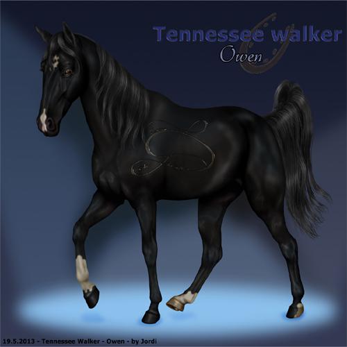 kůň: mimochodník - Owen