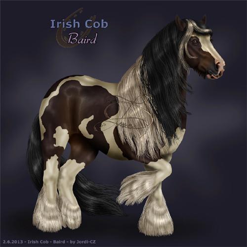 kůň: Irský Tinker - Baird