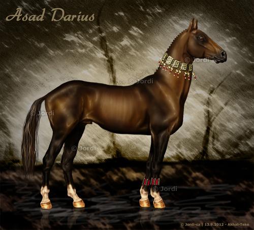 kůň: Akhal-Teke - Asad Darius