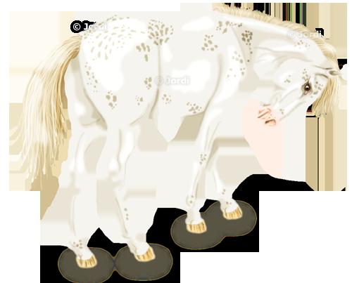 Kůň: Sweet Candy appaloosa