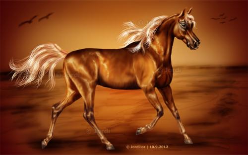 kůň: Arab - Golden Sand