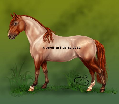 kůň: criollo - Reina