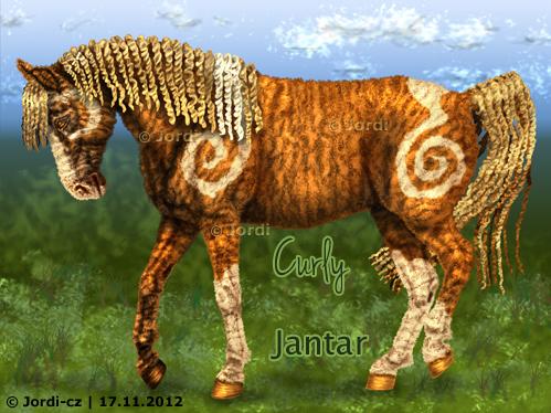kůň: curly - Jantar