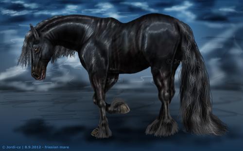 kůň: Frízský