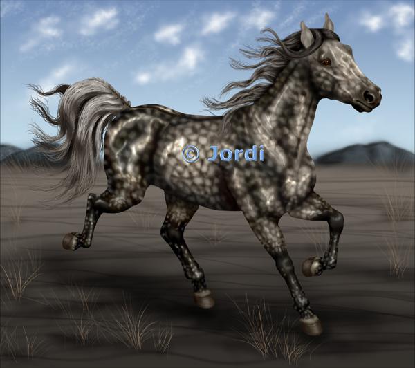 kůň: klusák - Erena