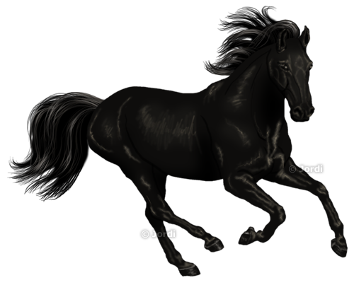 Kůň: Lusitano