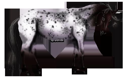 Kůň: Nokota