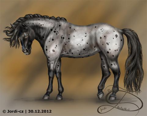 Kůň: Nokota - Nestor