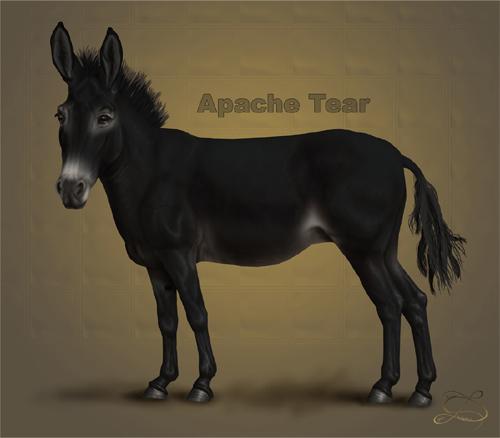 osel: Apache Tear