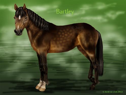 Poník: Bartley connemara
