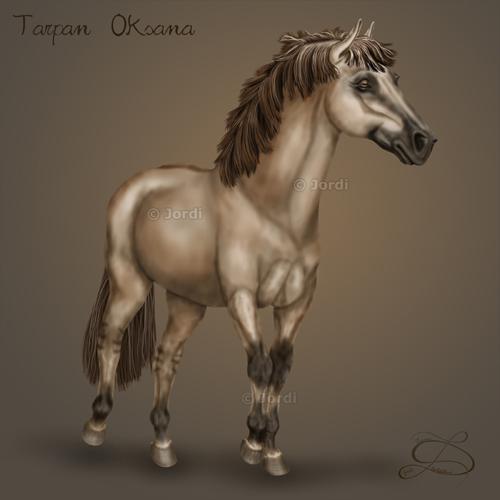 divoký kůň: Tarpan - Oksana