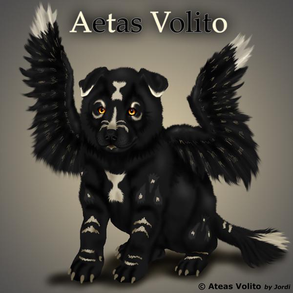 vlče: Aetas Volito