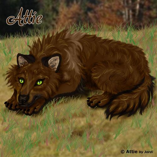 vlčice: Attie