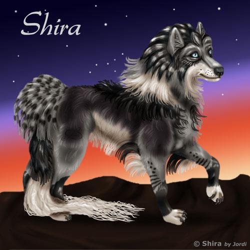 vlčice: Shira