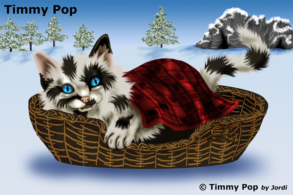 kocour: Timmy Pop