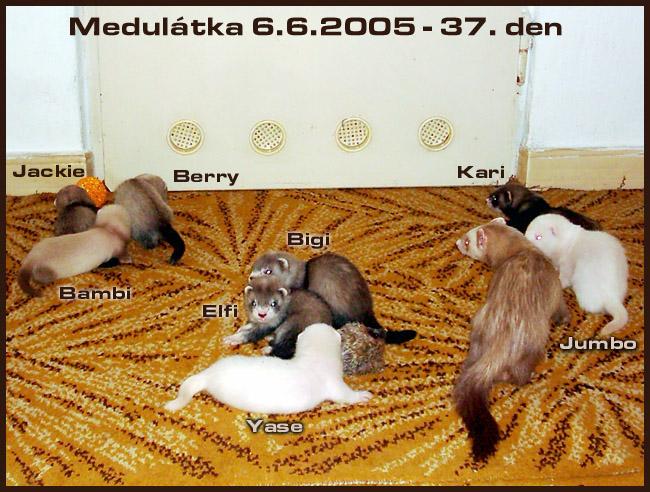medulátka I. - 2005